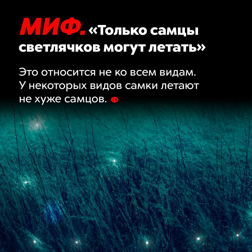 МИФ: «Только самцы светлячков могут летать».