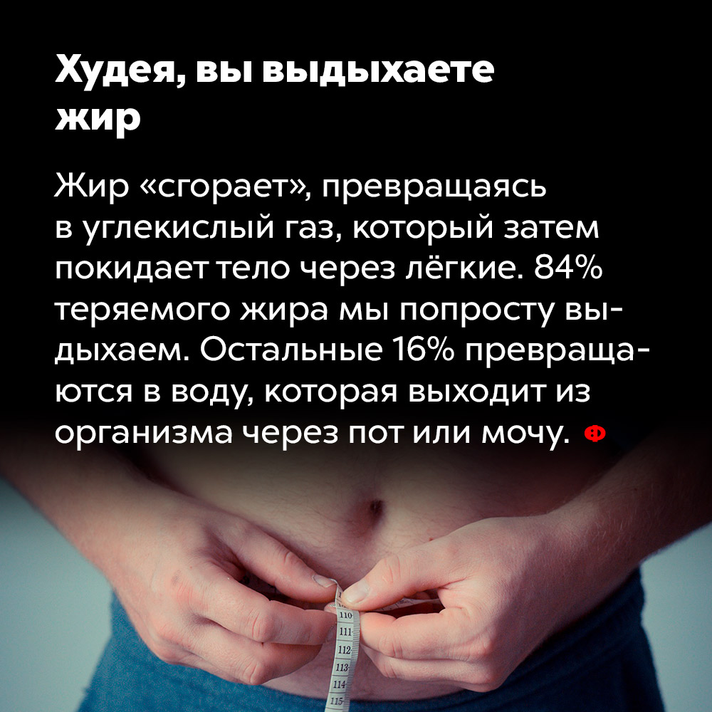 Худея, вы выдыхаете жир. Жир «сгорает», превращаясь в углекислый газ, который затем покидает тело через лёгкие. 84% теряемого жира мы попросту выдыхаем. Остальные 16% превращаются в воду, которая выходит из организма через пот или мочу.