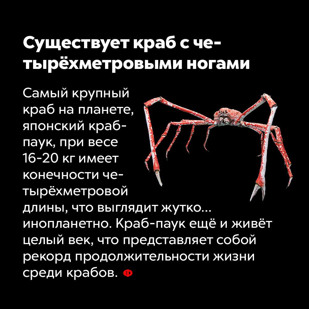Существует краб счетырёхметровыми ногами. Самый крупный краб на планете, японский краб-паук, при весе 16-20 кг имеет конечности четырёхметровой длины, что выглядит жутко… инопланетно. Краб-паук ещё и живёт целый век, что представляет собой рекорд продолжительности жизни среди крабов.