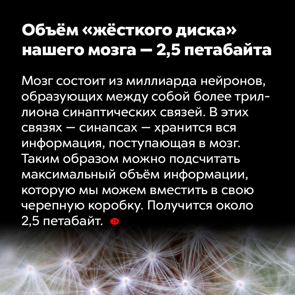 Объём «жёсткого диска» нашего мозга — 2,5петабайта. Мозг состоит из миллиарда нейронов, образующих между собой более триллиона синаптических связей. В этих связях —синапсах — хранится вся информация, поступающая в мозг. Таким образом можно подсчитать максимальный объём информации, которую мы можем вместить в свою черепную коробку. Получится около 2,5 петабайт.