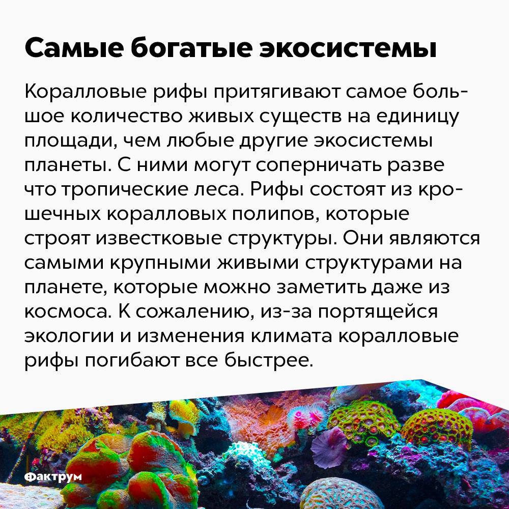 Самые богатые экосистемы. Коралловые рифы притягивают самое большое количество живых существ на единицу площади, чем любые другие экосистемы планеты. С ними могут соперничать разве что тропические леса. Рифы состоят из крошечных коралловых полипов, которые строят известковые структуры. Они являются самыми крупными живыми структурами на планете, которые можно заметить даже из космоса. К сожалению, из-за портящейся экологии и изменения климата коралловые рифы погибают всё быстрее.