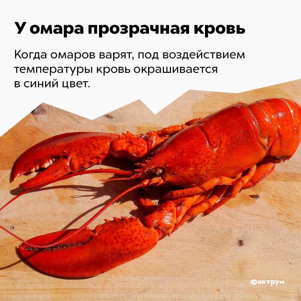 Уомара прозрачная кровь. Когда омаров варят, кровь под воздействием температуры, окрашивается в синий цвет.