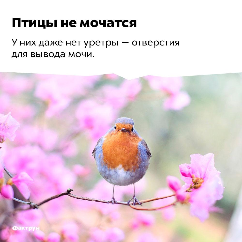 Птицы немочатся.