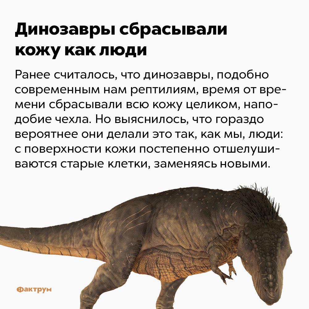 Динозавры сбрасывали кожу как люди. Ранее считалось, что динозавры, подобно современным нам рептилиям, время от времени сбрасывали всю кожу целиком, наподобие чехла. Но выяснилось, что гораздо вероятнее они делали это так, как мы, люди: с поверхности кожи постепенно отшелушивались старые клетки, заменяясь новыми.