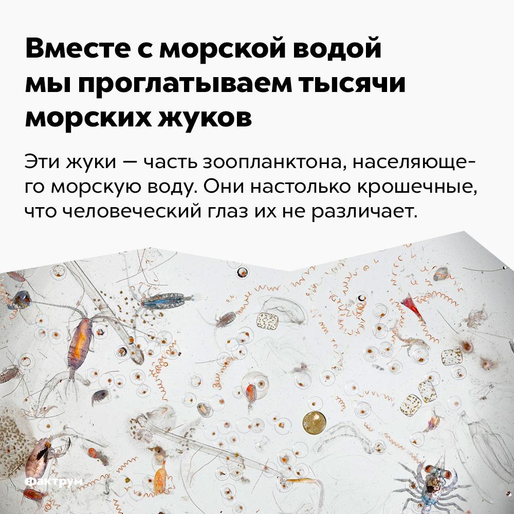Вместе сморской водой мы проглатываем тысячи морских жуков. Эти жуки — часть зоопланктона, населяющего морскую воду. Они настолько крошечные, что человеческий глаз их не различает.