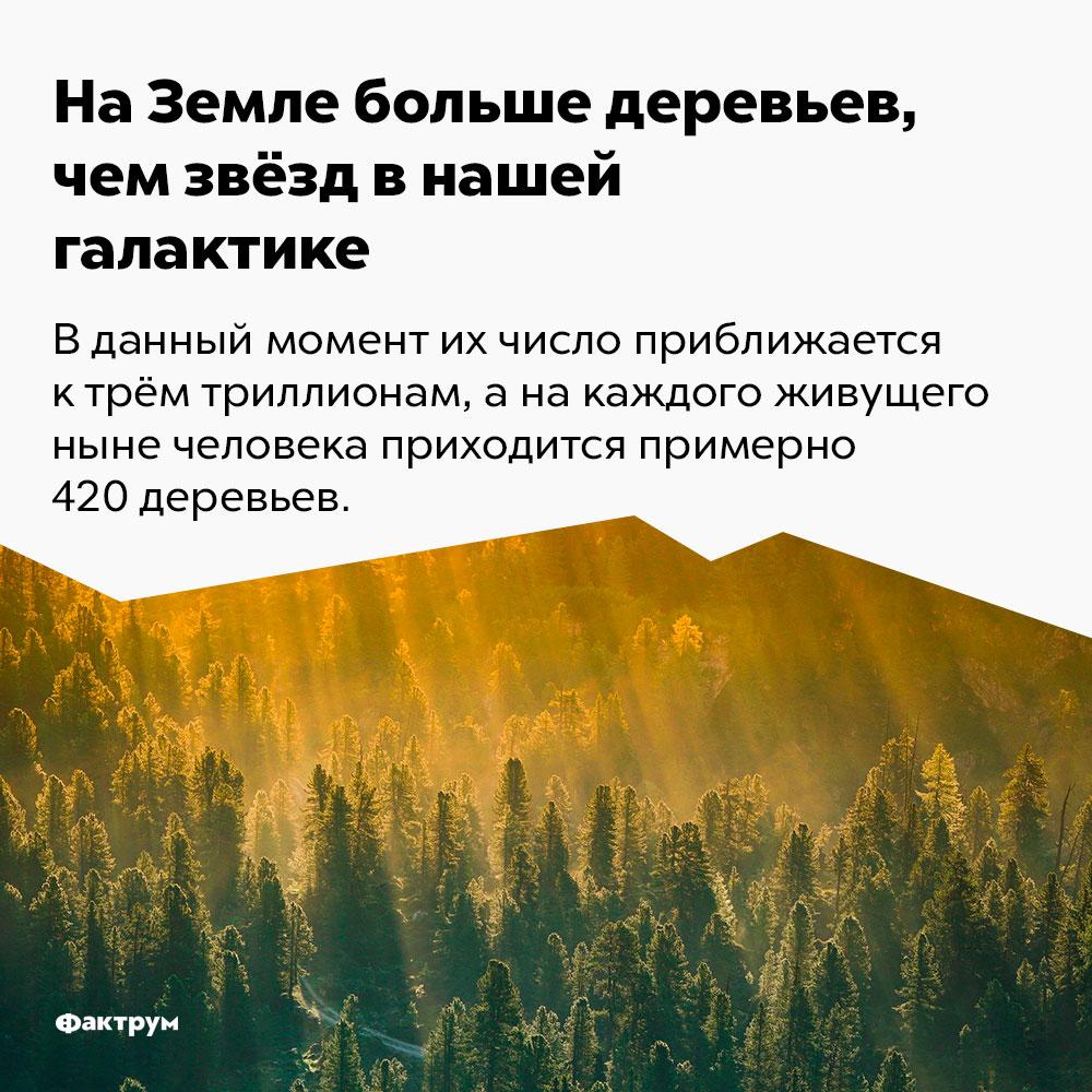 НаЗемле больше деревьев, чем звёзд внашей галактике. В данный момент их число приближается к трём миллионам, а на каждого живущего ныне человека приходится примерно 420 деревьев.