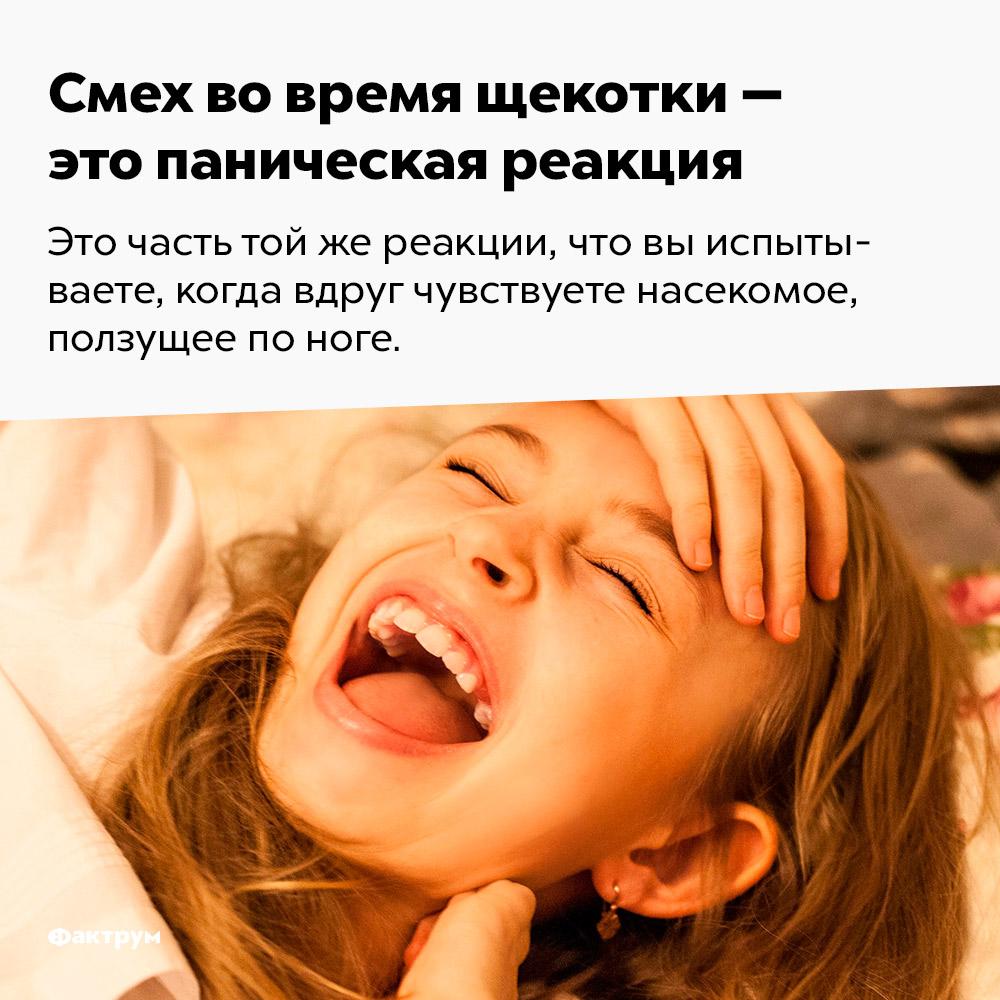 Смех вовремя щекотки — это паническая реакция. Это часть той же реакции, что вы испытываете, когда вдруг чувствуете насекомое, ползущее по ноге.