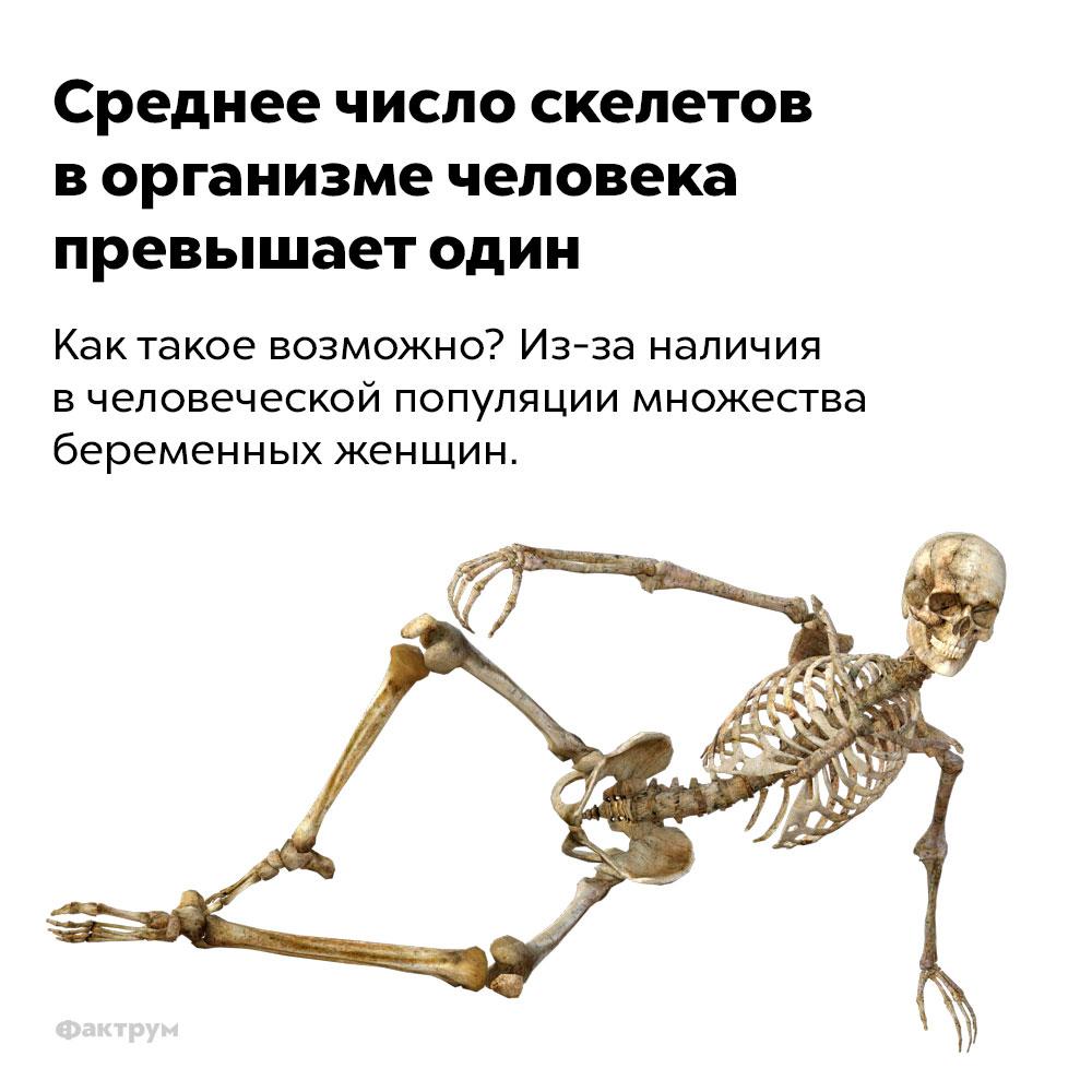 Среднее число скелетов ворганизме человека превышает один.