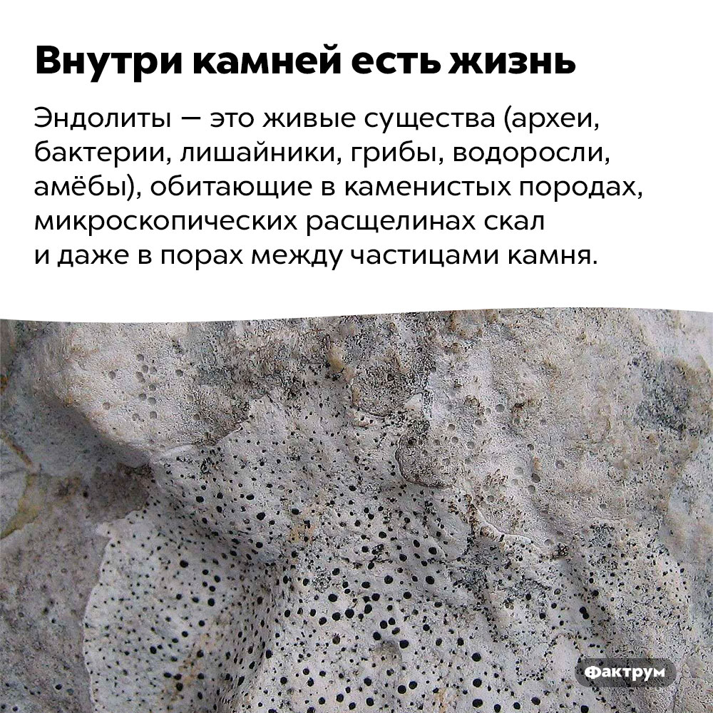 Внутри камней есть жизнь. Эндолиты — это живые существа (археи, бактерии, лишайники, грибы, водоросли, амёбы), обитающие в каменистых породах, микроскопических расщелинах скал и даже в порах между частицами камня.