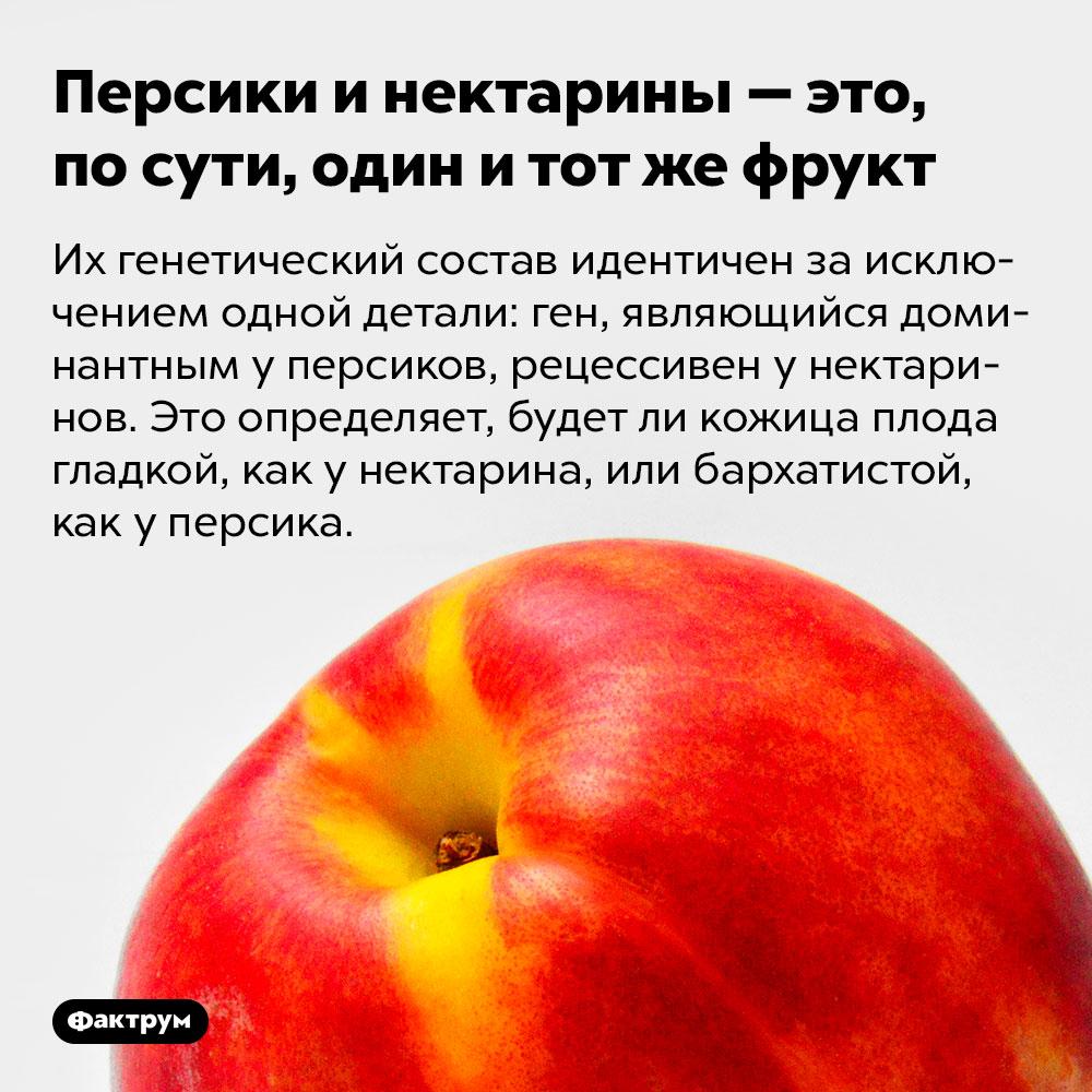 Персики инектарины — это, посути, один итот жефрукт. Их генетический состав идентичен за исключением одной детали: ген, являющийся доминантным у персиков, рецессивен у нектаринов. Это определяет, будет ли кожица плода гладкой, как у нектарина, или бархатистой, как у персика.