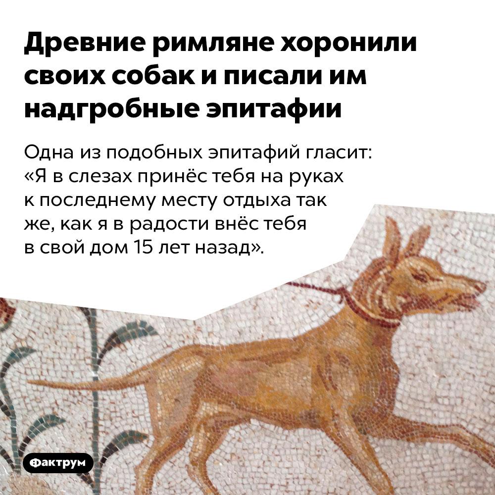 Древние римляне хоронили своих собак иписали им надгробные эпитафии. Одна из подобных эпитафий гласит: «Я в слезах принёс тебя на руках к последнему месту отдыха так же, как я в радости внёс тебя в свой дом 15 лет назад».