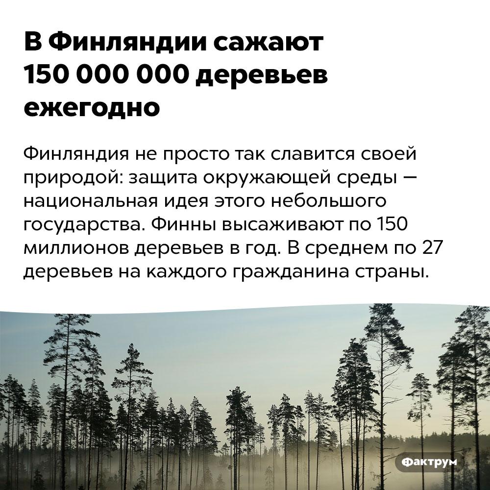ВФинляндии сажают 150000000 деревьев ежегодно. Финляндия не просто так славится своей природой: защита окружающей среды — национальная идея этого небольшого государства. Финны высаживают по 150 миллионов деревьев в год. В среднем по 27 деревьев на каждого гражданина страны.
