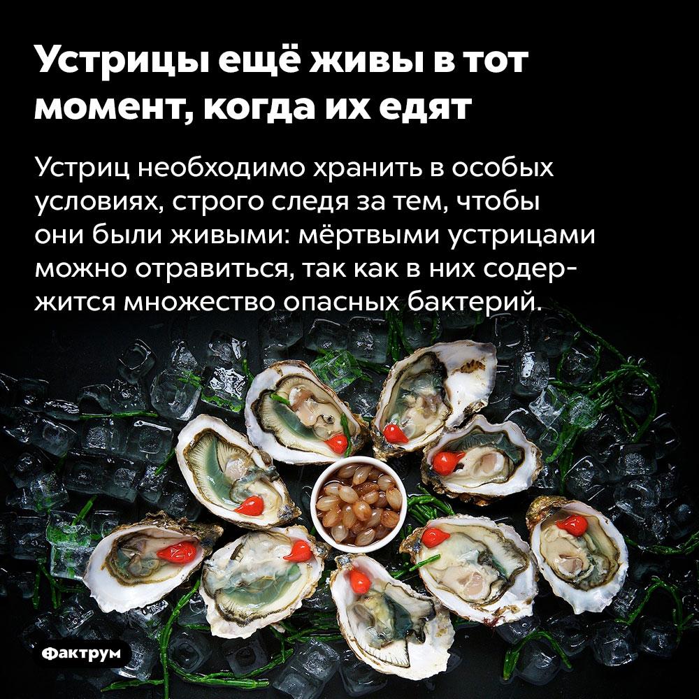 Устрицы ещё живы втот момент, когда их едят. Устриц необходимо хранить в особых условиях, строго следя за тем, чтобы они были живыми: мёртвыми устрицами можно отравиться, так как в них содержится множество опасных бактерий.