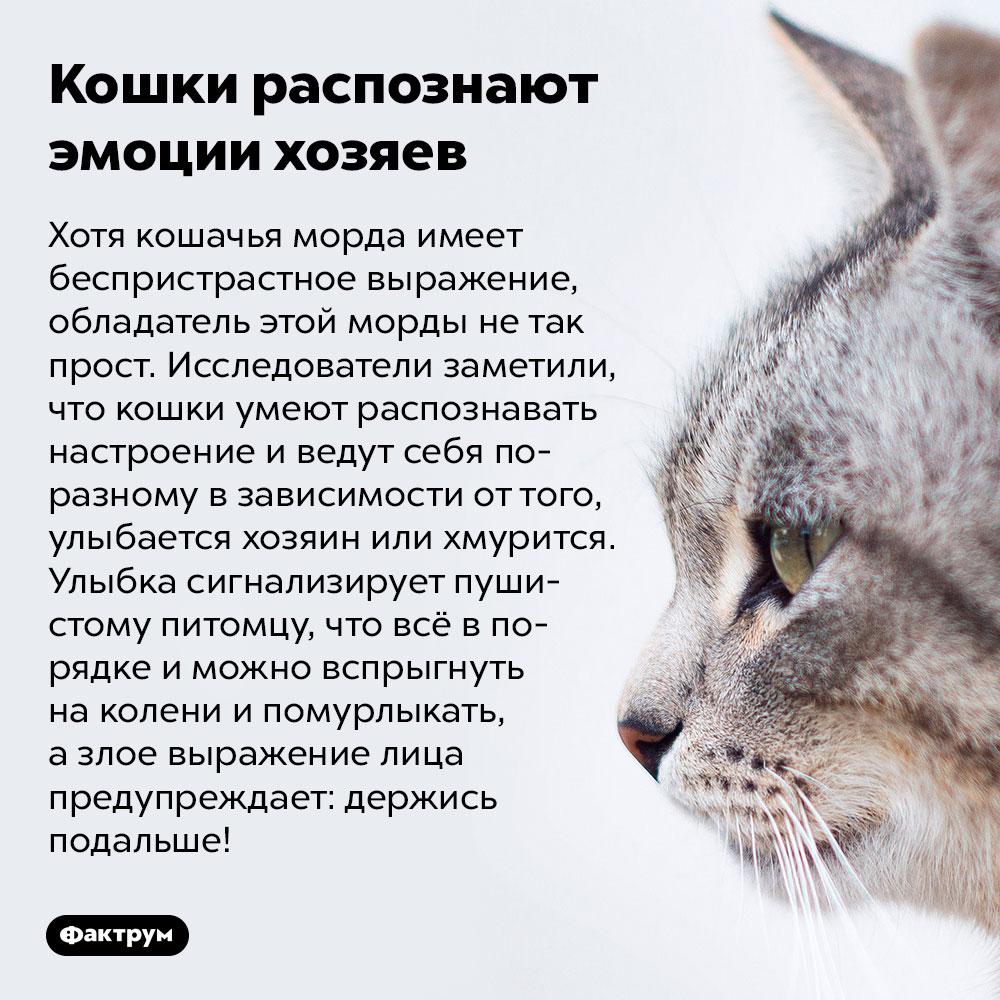 Кошки распознают эмоции хозяев. Хотя кошачья морда имеет беспристрастное выражение, обладатель этой морды не так прост. Исследователи заметили, что кошки умеют распознавать настроение и ведут себя по-разному в зависимости от того, улыбается хозяин или хмурится. Улыбка сигнализирует пушистому питомцу, что всё в порядке и можно вспрыгнуть на колени и помурлыкать, а злое выражение лица предупреждает: держись подальше!