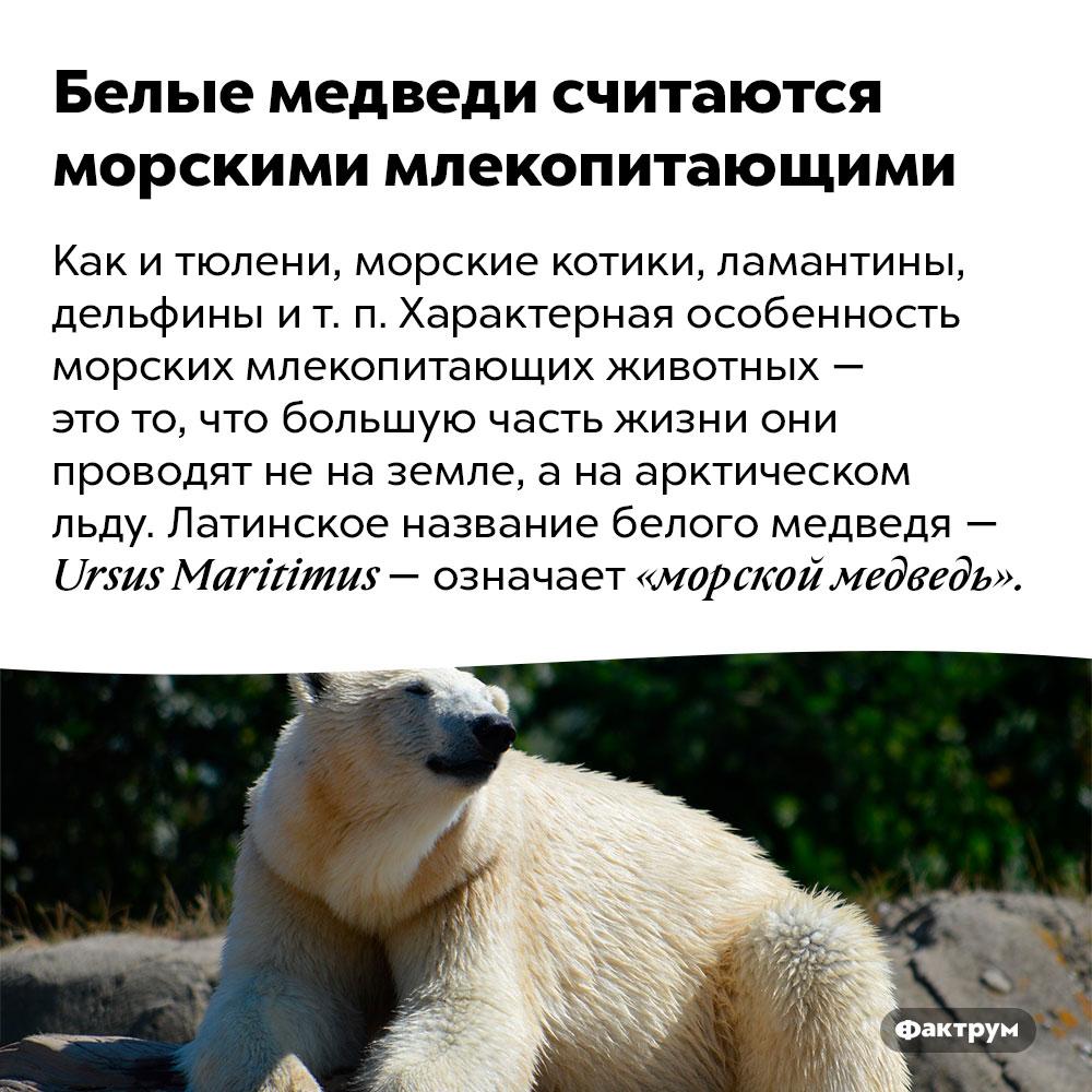 Белые медведи считаются морскими млекопитающими. Как и тюлени, морские котики, ламантины, дельфины и т. п. Характерная особенность морских млекопитающих животных — это то, что большую часть жизни они проводят не на земле, а на арктическом льду. Латинское название белого медведя — Ursus Maritimus — означает «морской медведь».