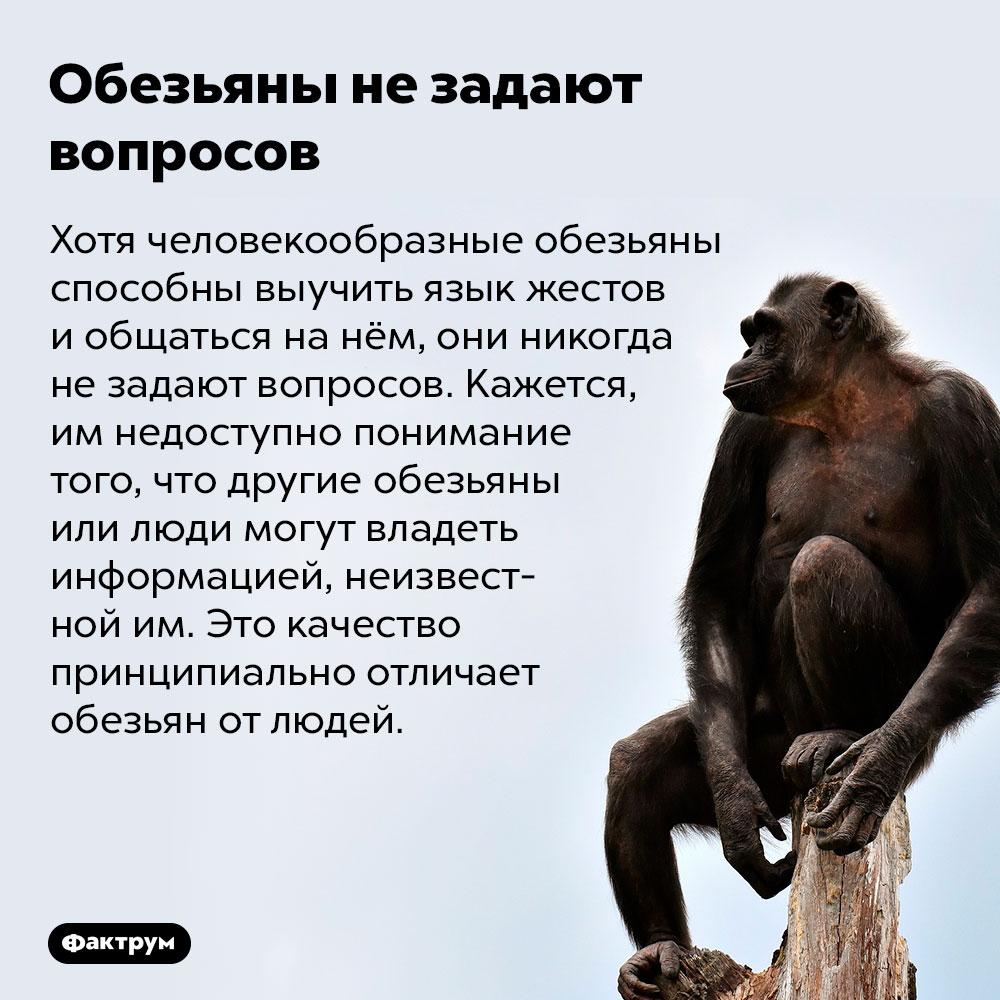 Обезьяны незадают вопросов. Хотя человекообразные обезьяны способны выучить язык жестов и общаться на нём, они никогда не задают вопросов. Кажется, им недоступно понимание того, что другие обезьяны или люди могут владеть информацией, неизвестной им. Это качество принципиально отличает обезьян от людей.