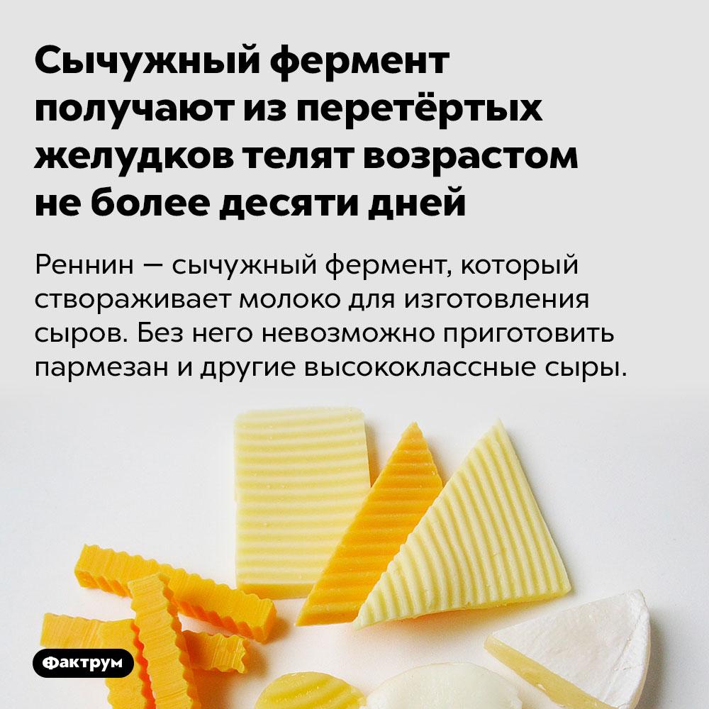 Сычужный фермент получают изперетёртых желудков телят возрастом неболее десяти дней. Реннин — сычужный фермент, который створаживает молоко для изготовления сыров. Без него невозможно приготовить пармезан и другие высококлассные сыры.