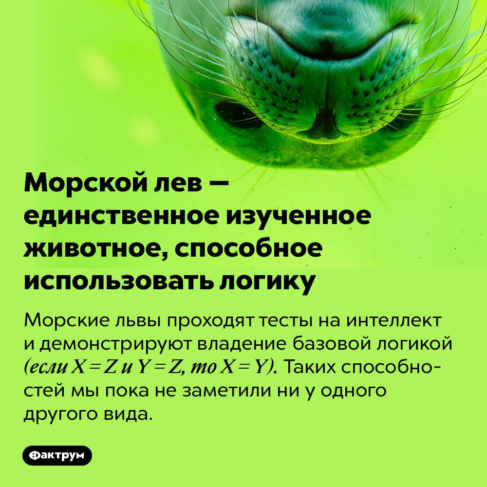 Морской лев — единственное изученное животное, способное использовать логику. Морские львы проходят тесты на интеллект и демонстрируют владение базовой логикой (если X = Z и Y = Z, то X = Y). Таких способностей мы пока не заметили ни у одного другого вида.