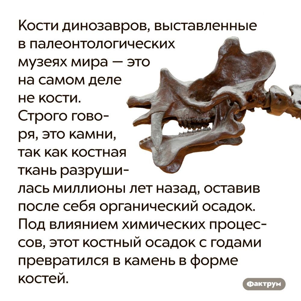 Кости динозавров, выставленные впалеонтологических музеях мира — это насамом деле некости. Строго говоря, это камни, так как костная ткань разрушилась миллионы лет назад, оставив после себя органический осадок. Под влиянием химических процессов, этот костный осадок с годами превратился в камень в форме костей.