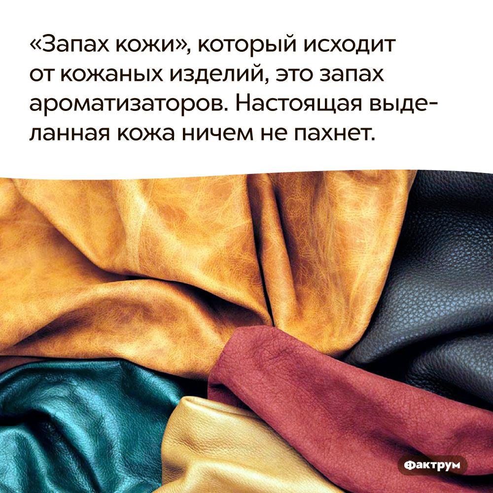 «Запах кожи», который исходит откожаных изделий, это запах ароматизаторов. Настоящая выделанная кожа ничем не пахнет.