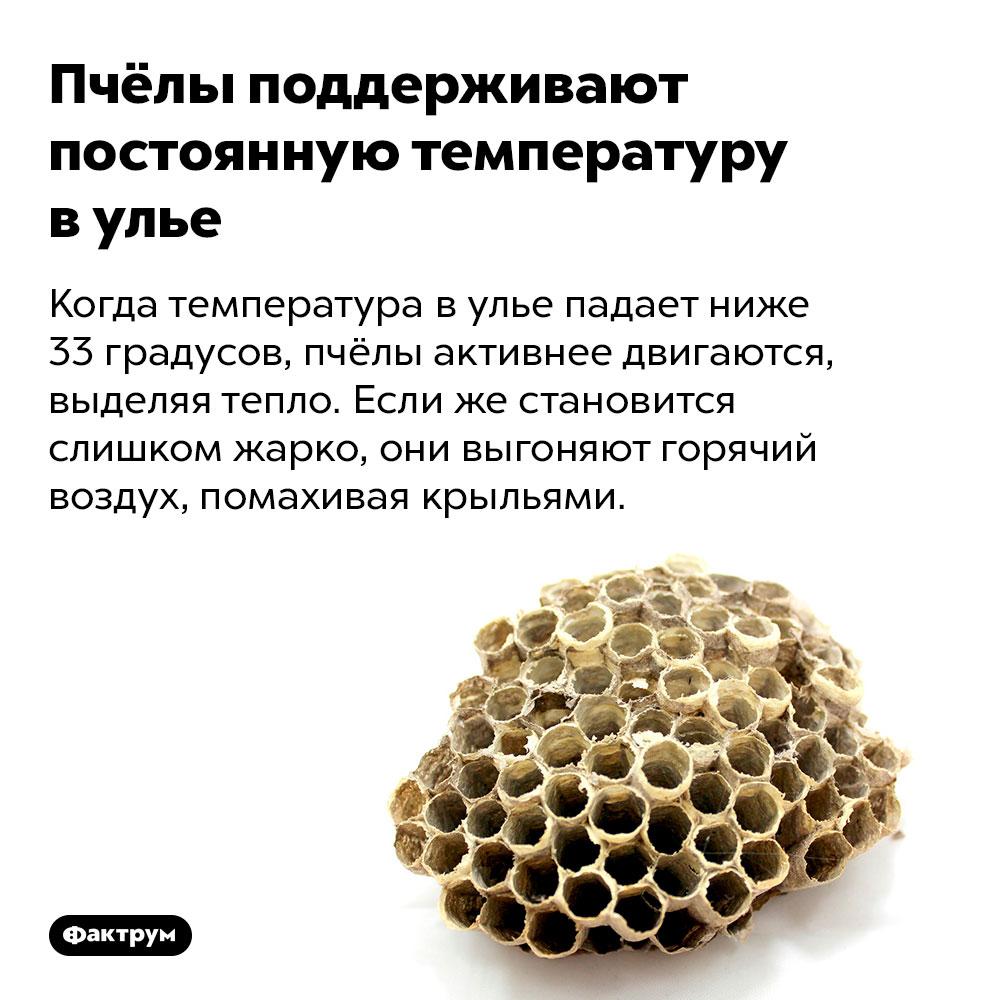 Пчёлы поддерживают постоянную температуру вулье. Когда температура в улье падает ниже 33 градусов, пчёлы активнее двигаются, выделяя тепло. Если же становится слишком жарко, они выгоняют горячий воздух, помахивая крыльями.