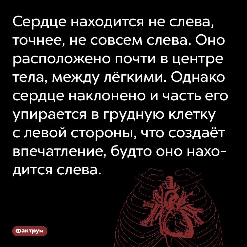 Сердце находится неслева. Точнее, не совсем слева. Оно расположено почти в центре тела, между лёгкими. Однако сердце наклонено и часть его упирается в грудную клетку с левой стороны, что создаёт впечатление, будто оно находится слева.
