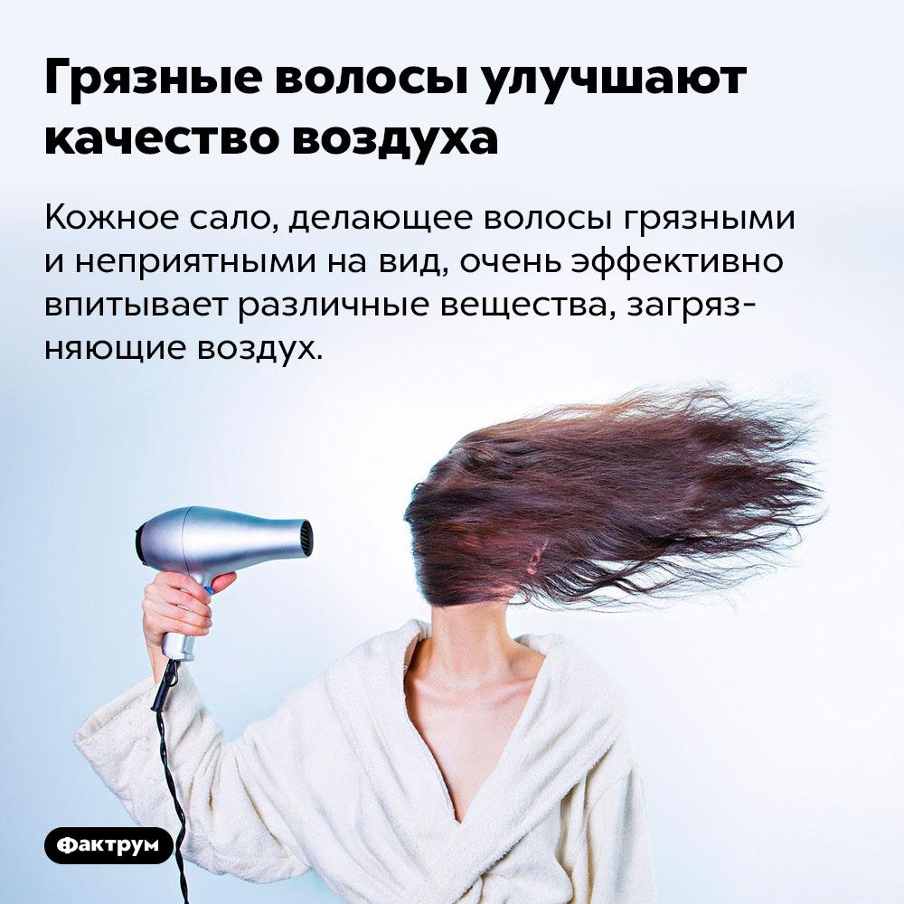 Грязные волосы улучшают качество воздуха. Кожное сало, делающее волосы грязными и неприятными на вид, очень эффективно впитывает различные вещества, загрязняющие воздух.