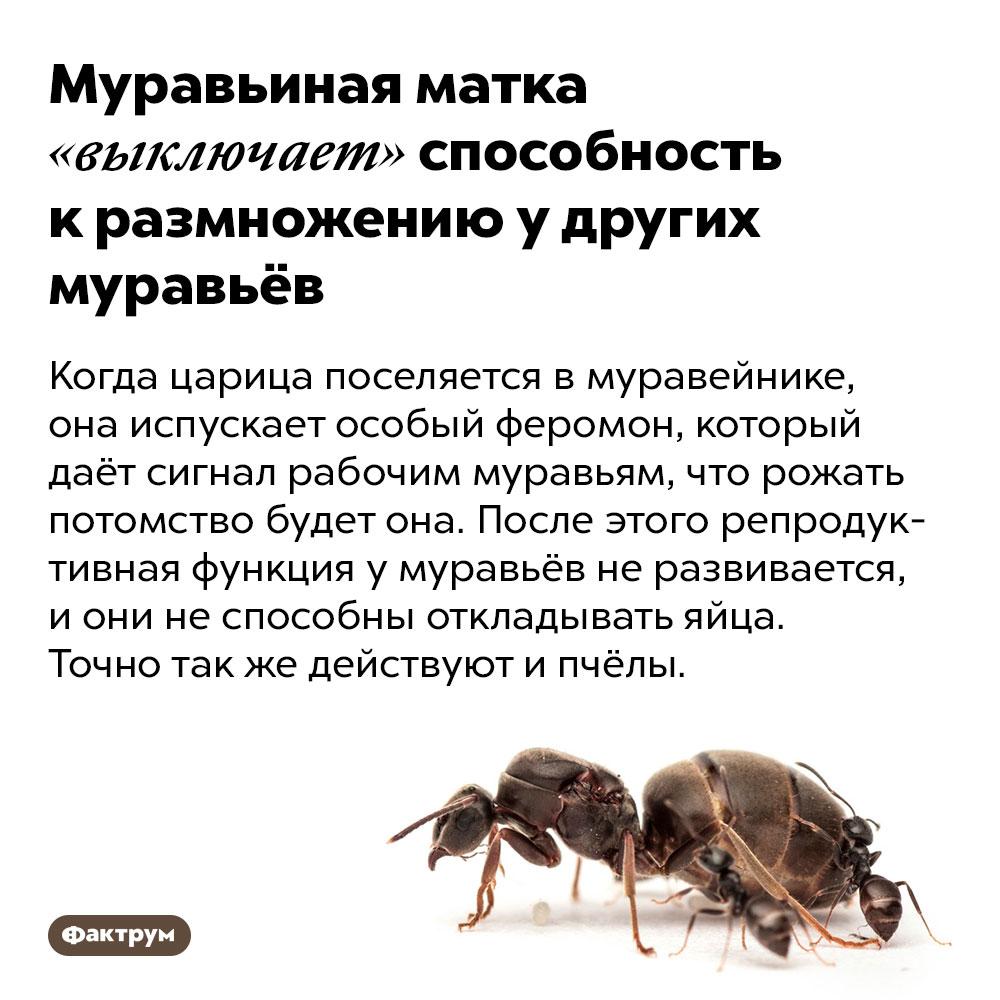 Муравьиная матка «выключает» способность кразмножению удругих муравьёв. Когда царица поселяется в муравейнике, она испускает особый феромон, который даёт сигнал рабочим муравьям, что рожать потомство будет она. После этого репродуктивная функция у муравьёв не развивается, и они не способны откладывать яйца. Точно так же действуют и пчёлы.