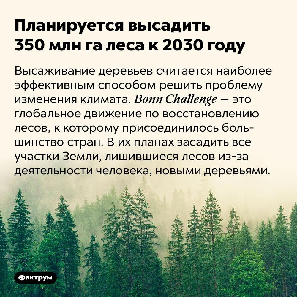 Планируется высадить 350млнга леса к2030году. Высаживание деревьев считается наиболее эффективным способом решить проблему изменения климата. Bonn Challenge — это глобальное движение по восстановлению лесов, к которому присоединилось большинство стран. В их планах засадить все участки Земли, лишившиеся лесов из-за деятельности человека, новыми деревьями.