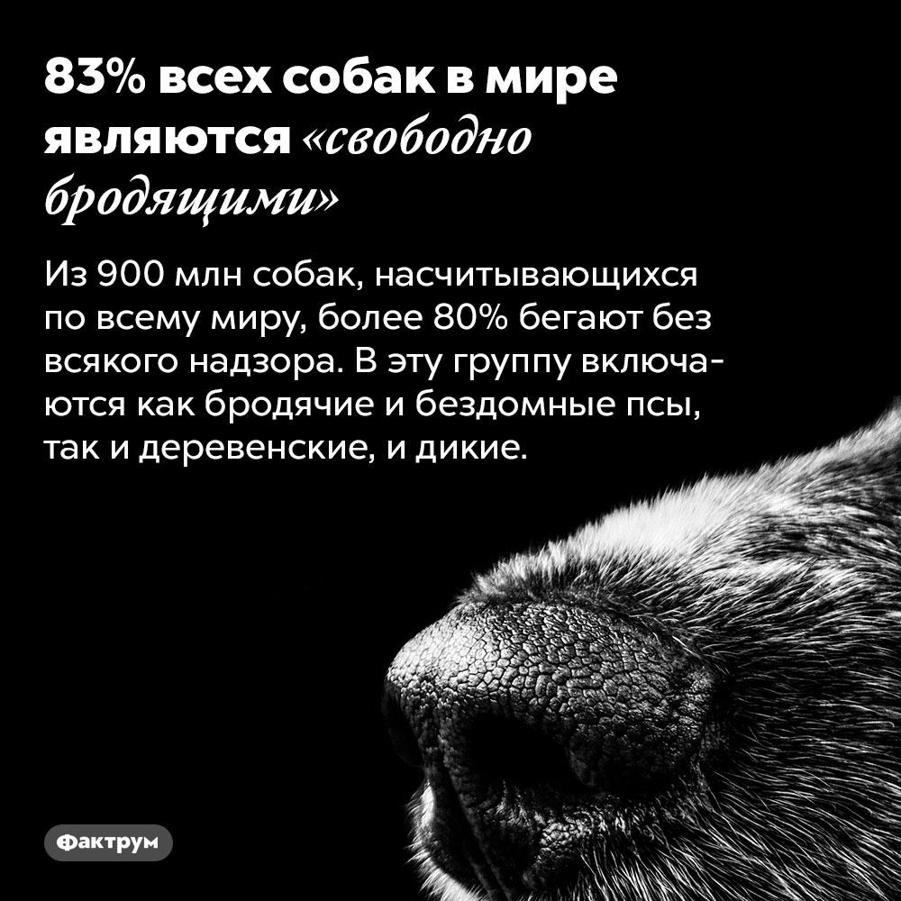 83%всех собак вмире являются «свободно бродящими». Из 900 млн собак, насчитывающихся по всему миру, более 80% бегают без всякого надзора. В эту группу включаются как бродячие и бездомные псы, так и деревенские, и дикие.