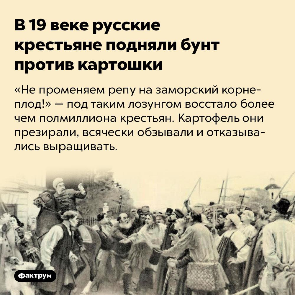 В19веке русские крестьяне подняли бунт против картошки. «Не променяем репу на заморский корнеплод!» — под таким лозунгом восстало более чем полмиллиона крестьян. Картофель они презирали, всячески обзывали и отказывались выращивать.