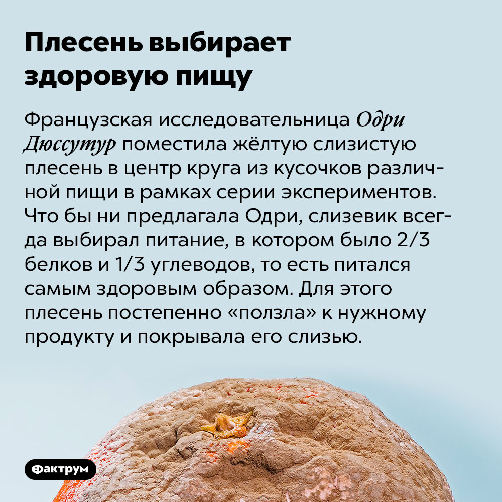 Плесень выбирает здоровую пищу. Французская исследовательница Одри Дюссутур поместила жёлтую слизистую плесень в центр круга из кусочков различной пищи в рамках серии экспериментов. Что бы ни предлагала Одри, слизевик всегда выбирал питание, в котором было 2/3 белков и 1/3 углеводов, то есть питался самым здоровым образом. Для этого плесень постепенно «ползла» к нужному продукту и покрывала его слизью.