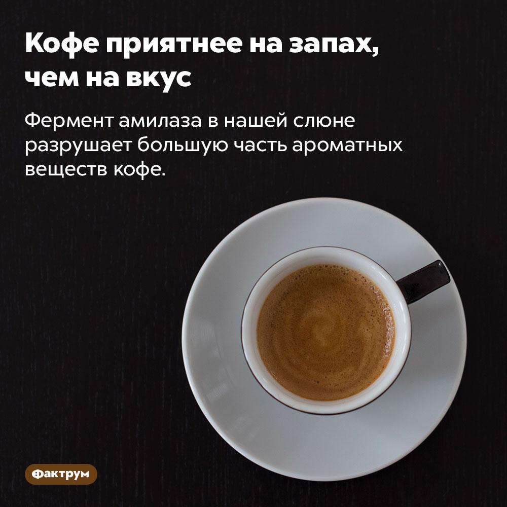 Кофе приятнее назапах, чем навкус. Фермент амилаза в нашей слюне разрушает большую часть ароматных веществ кофе.