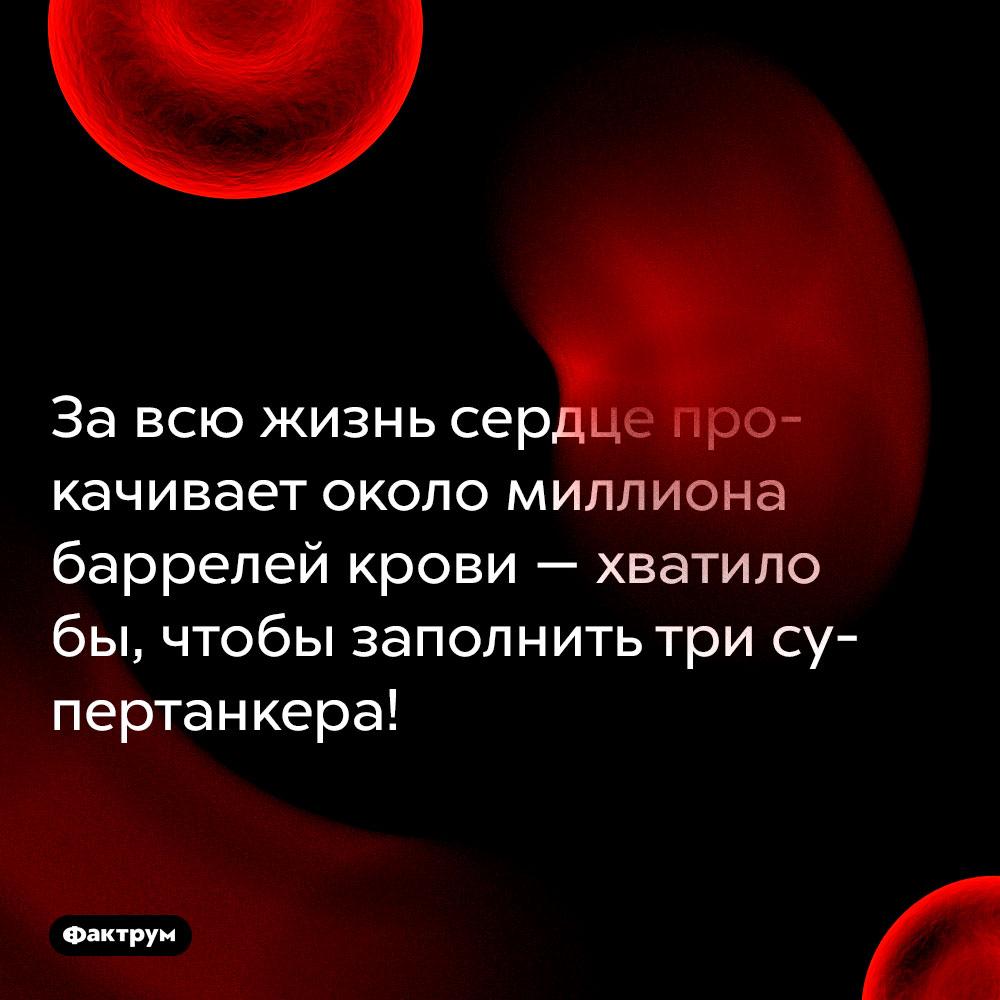 Завсю жизнь сердце прокачивает около миллиона баррелей крови. Хватило бы, чтобы заполнить три супертанкера!
