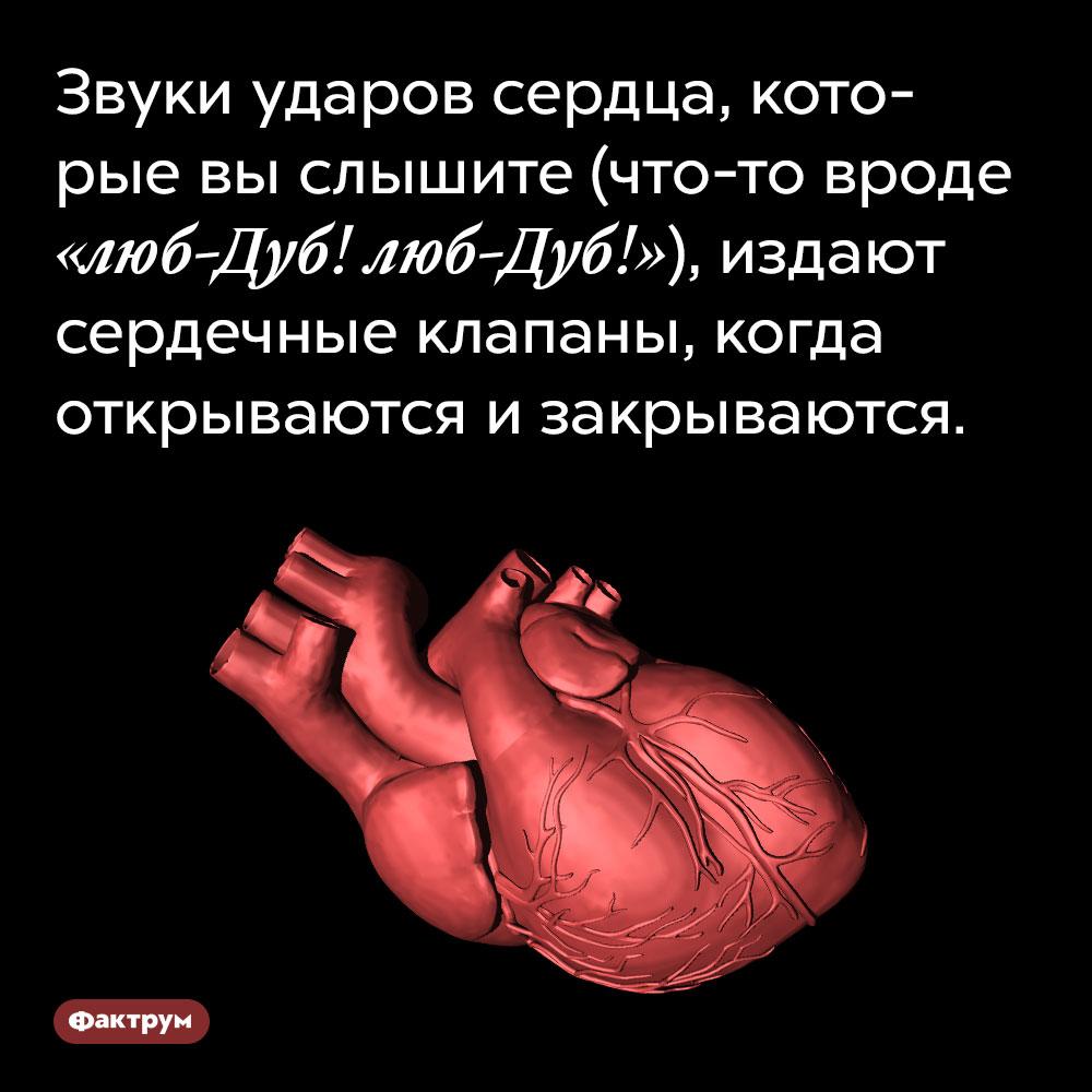 Звуки ударов сердца, которые выслышите (что-то вроде «люб-Дуб! люб-Дуб!»), издают сердечные клапаны, когда открываются изакрываются.