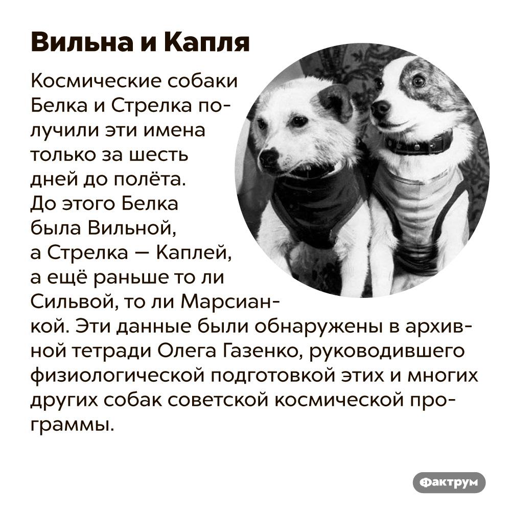 Вильна иКапля. Космические собаки Белка и Стрелка получили эти имена только за шесть дней до полёта. До этого Белка была Вильной, а Стрелка — Каплей, а ещё раньше то ли Сильвой, то ли Марсианкой. Эти данные обнаружены в архивной тетради Олега Газенко, руководившего физиологической подготовкой этих и многих других собак советской космической программы.