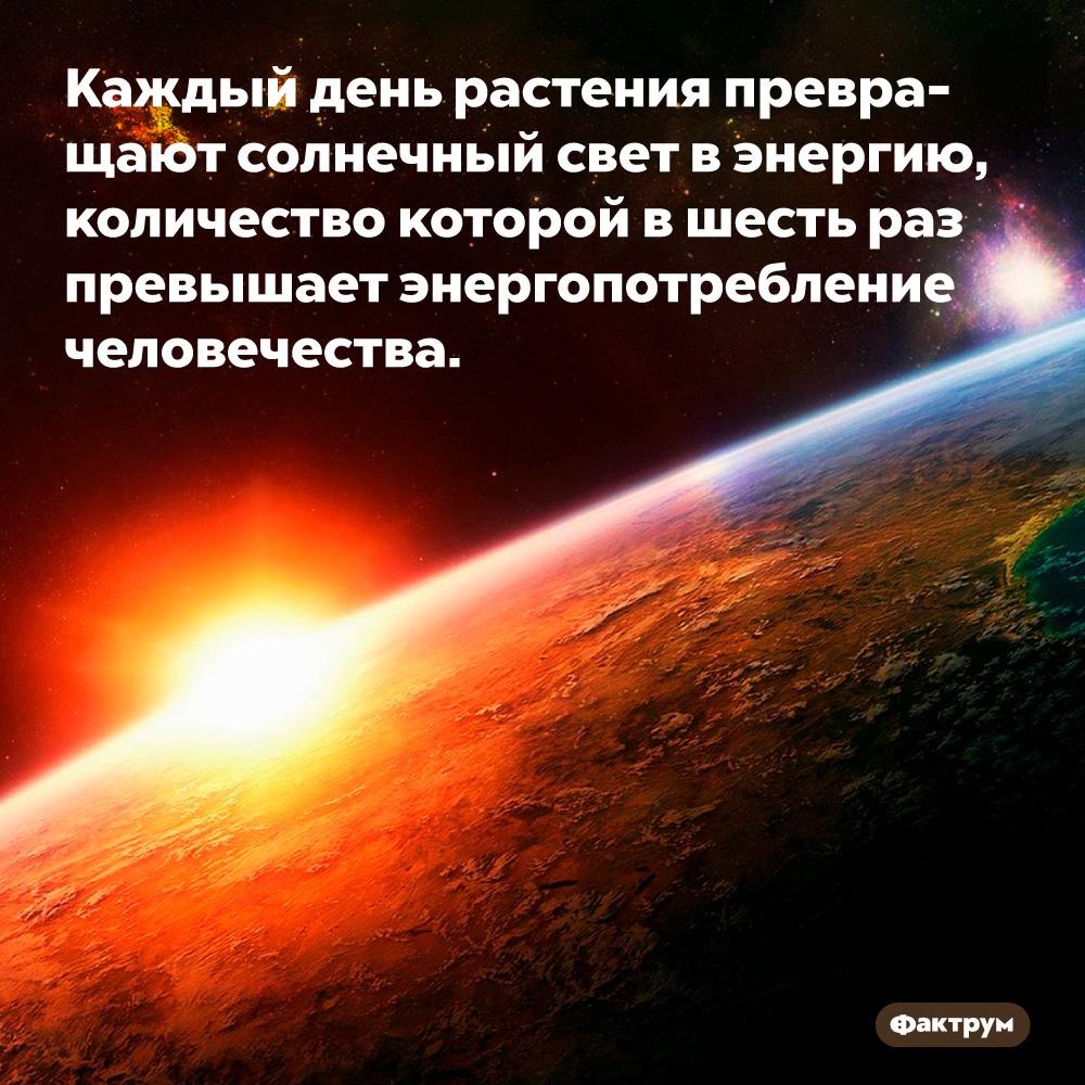 Каждый день растения превращают солнечный свет вэнергию, количество которой вшесть раз превышает энергопотребление человечества.