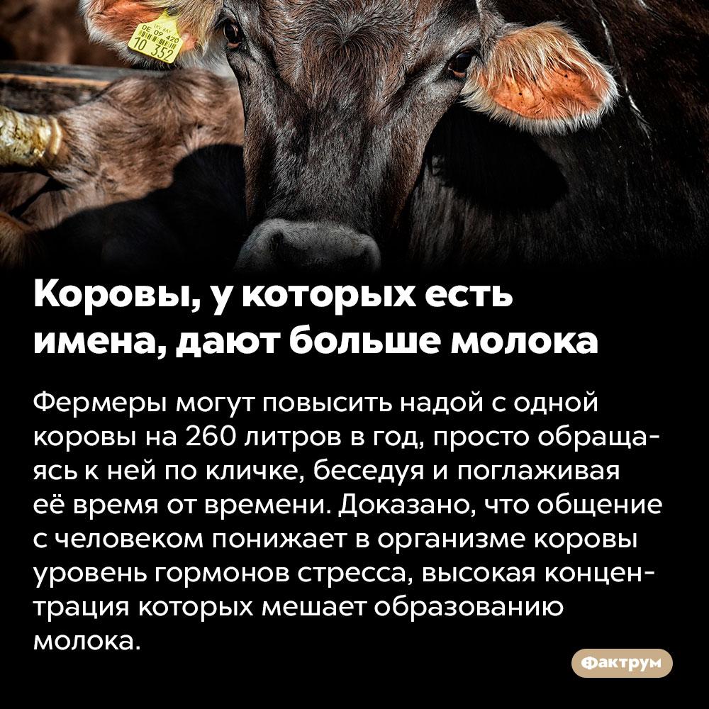 Коровы, у которых есть имена, дают больше молока. Фермеры могут повысить надой с одной коровы на 260 литров в год, просто обращаясь к ней по кличке, беседуя и поглаживая её время от времени. Доказано, что общение с человеком понижает в организме коровы уровень гормонов стресса, высокая концентрация которых мешает образованию молока.