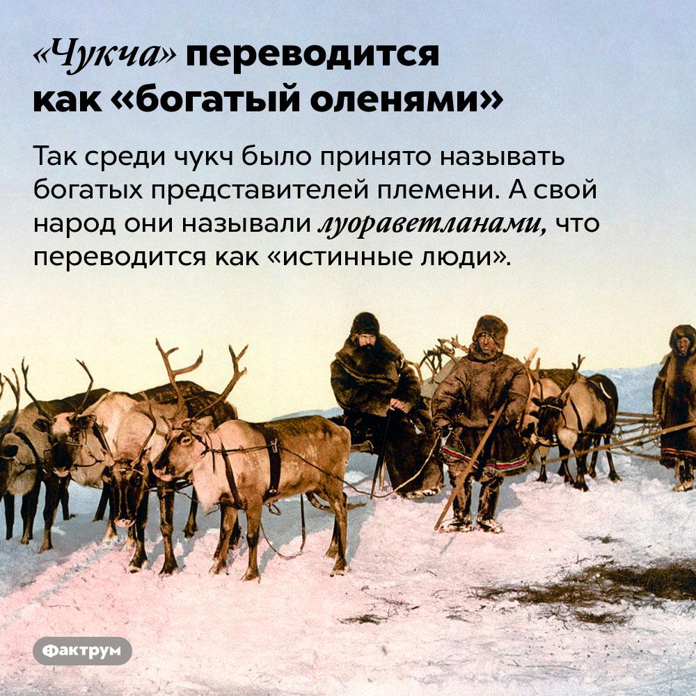 «Чукча» переводится как «богатый оленями». Так среди чукч было принято называть богатых представителей племени. А свой народ они называли луораветланами, что переводится как «истинные люди».