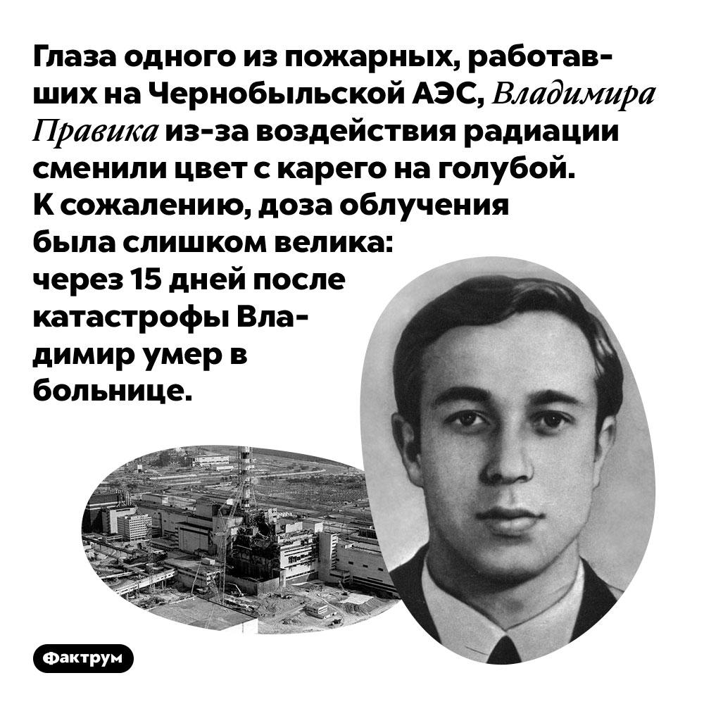 Глаза одного изпожарных, работавших наЧернобыльской АЭС, Владимира Правика из-за воздействия радиации сменили цвет скарего наголубой. К сожалению, доза облучения была слишком велика: через 15 дней после катастрофы Владимир умер в больнице.