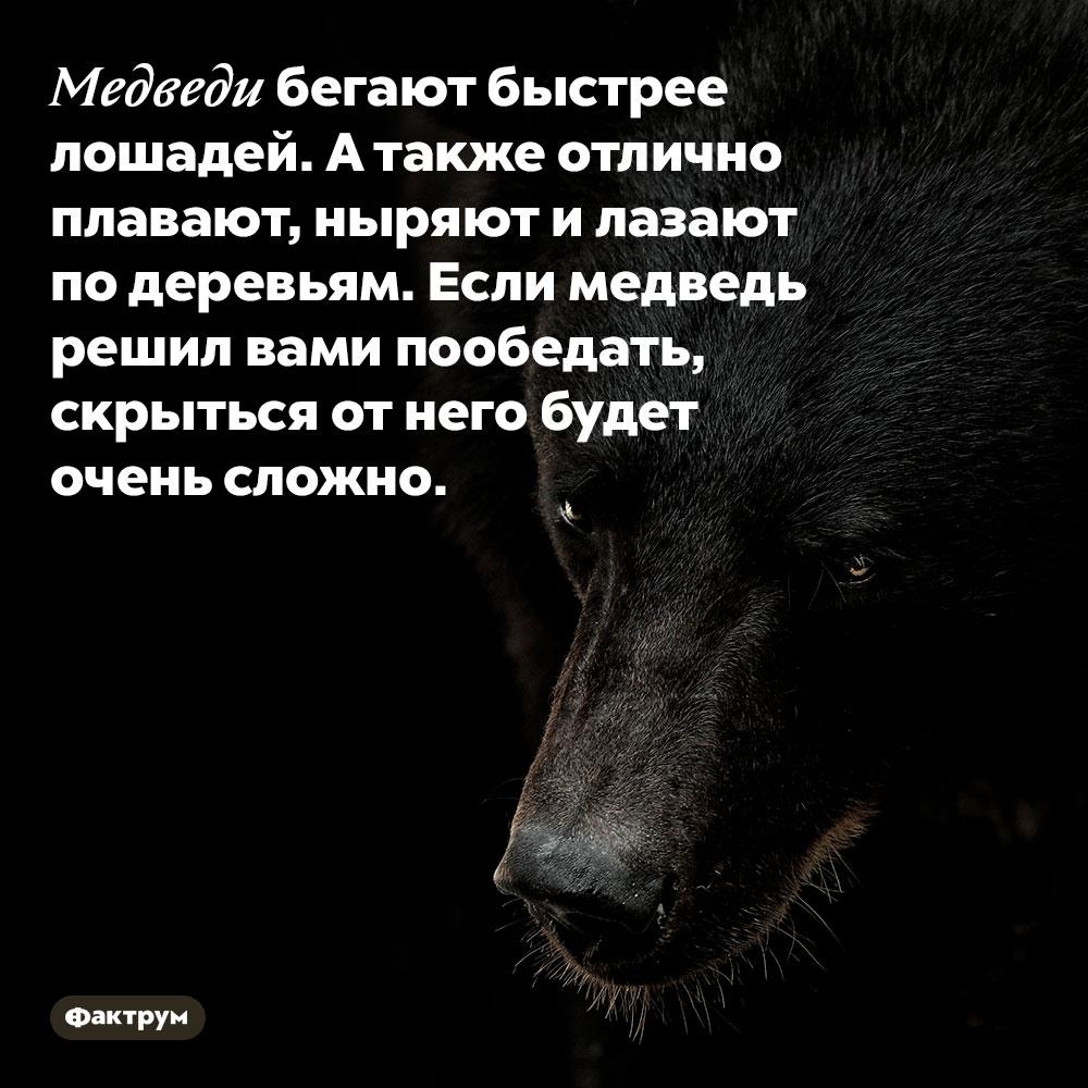Медведи бегают быстрее лошадей. А также отлично плавают, ныряют и лазают по деревьям. Если медведь решил вами пообедать, скрыться от него будет очень сложно.