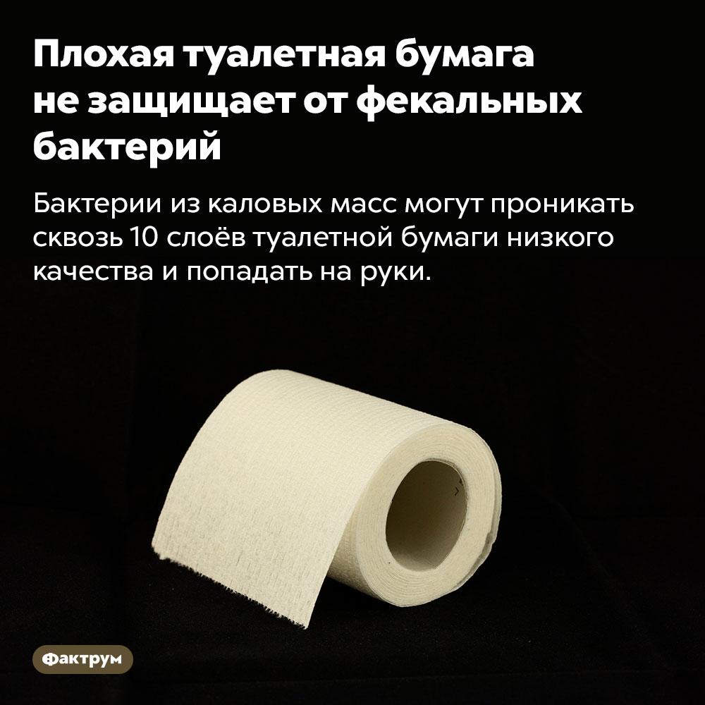 Плохая туалетная бумага незащищает отфекальных бактерий. Бактерии из каловых масс могут проникать сквозь 10 слоёв туалетной бумаги низкого качества и попадать на руки.