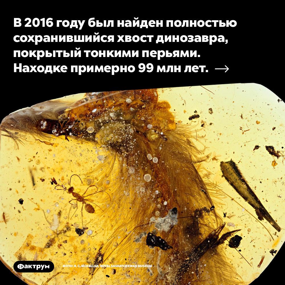 В2016году был найден полностью сохранившийся хвост динозавра, покрытый тонкими перьями. Находке примерно 99млнлет.