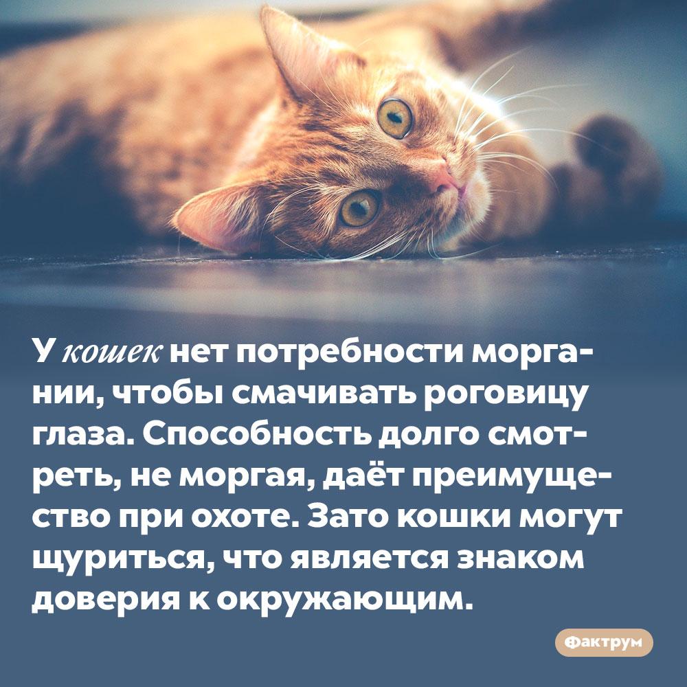 У кошек нет потребности моргании, чтобы смачивать роговицу глаза. Способность долго смотреть, не моргая, даёт преимущество при охоте. Зато кошки могут щуриться, что является знаком доверия к окружающим.