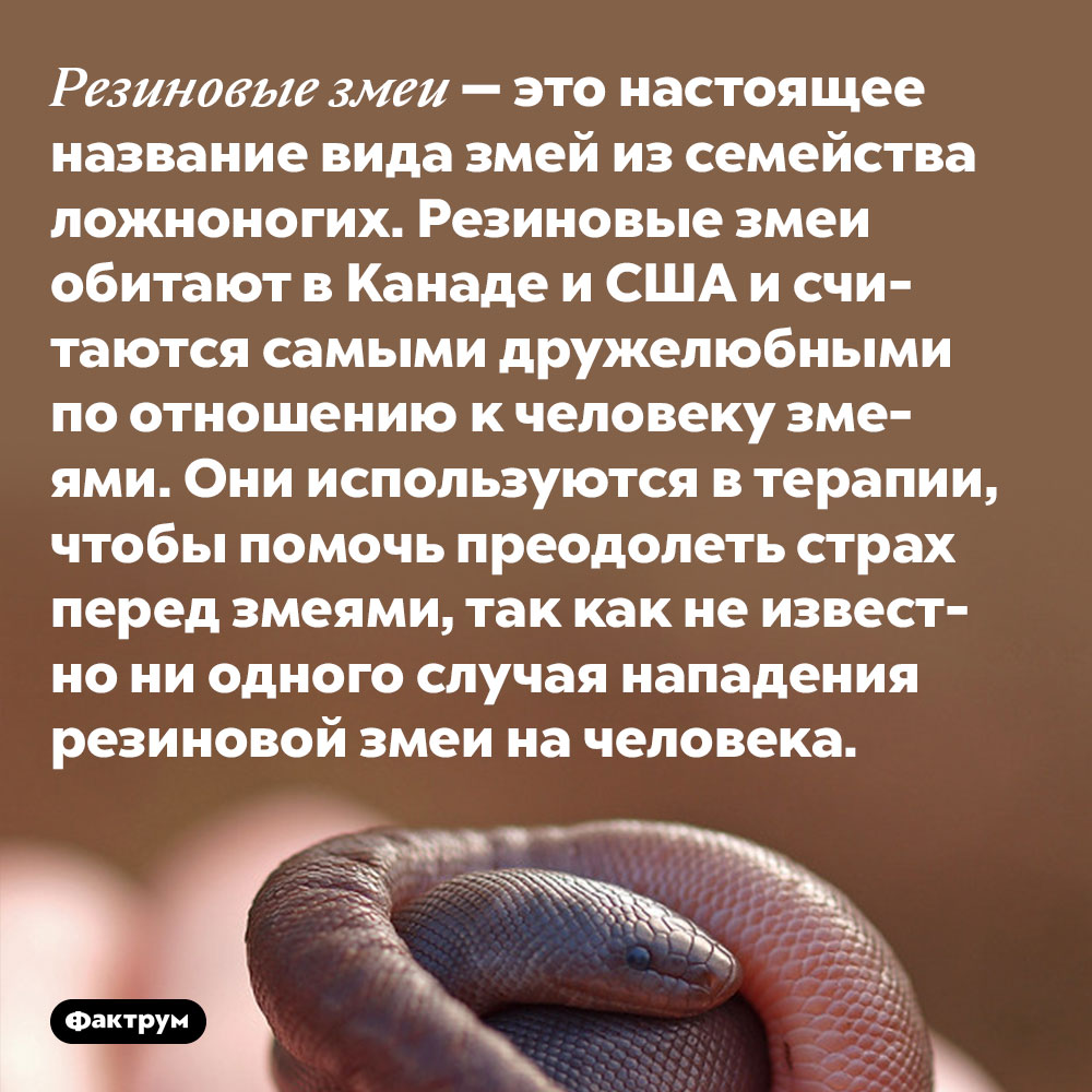 Резиновые змеи — это настоящее название вида змей из семейства ложноногих. Резиновые змеи обитают в Канаде и США и считаются самыми дружелюбными по отношению к человеку змеями. Они используются в терапии, чтобы помочь преодолеть страх перед змеями, так как не известно ни одного случая нападения резиновой змеи на человека.