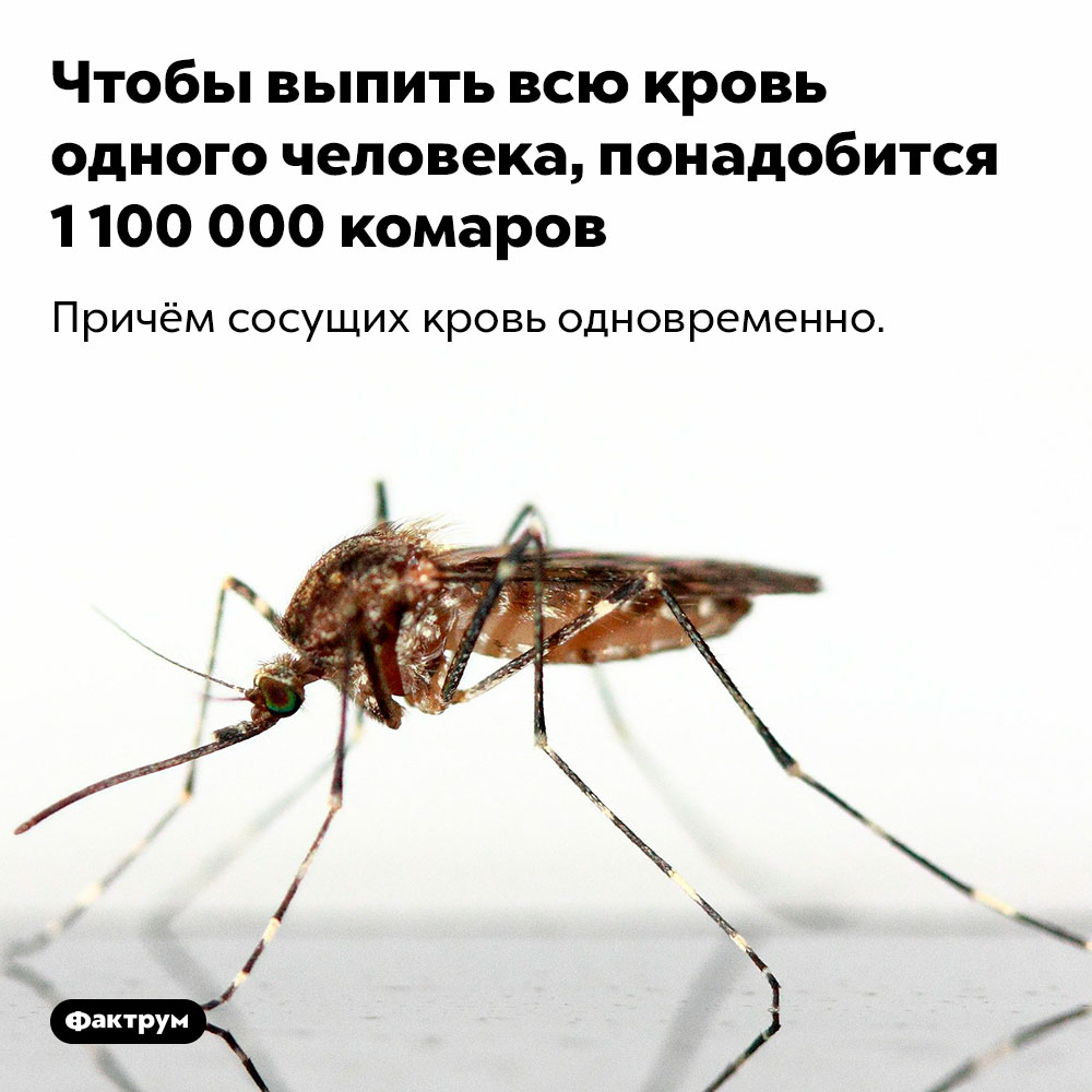 Чтобы выпить всю кровь одного человека, понадобится 1100000 комаров. Причём сосущих кровь одновременно.
