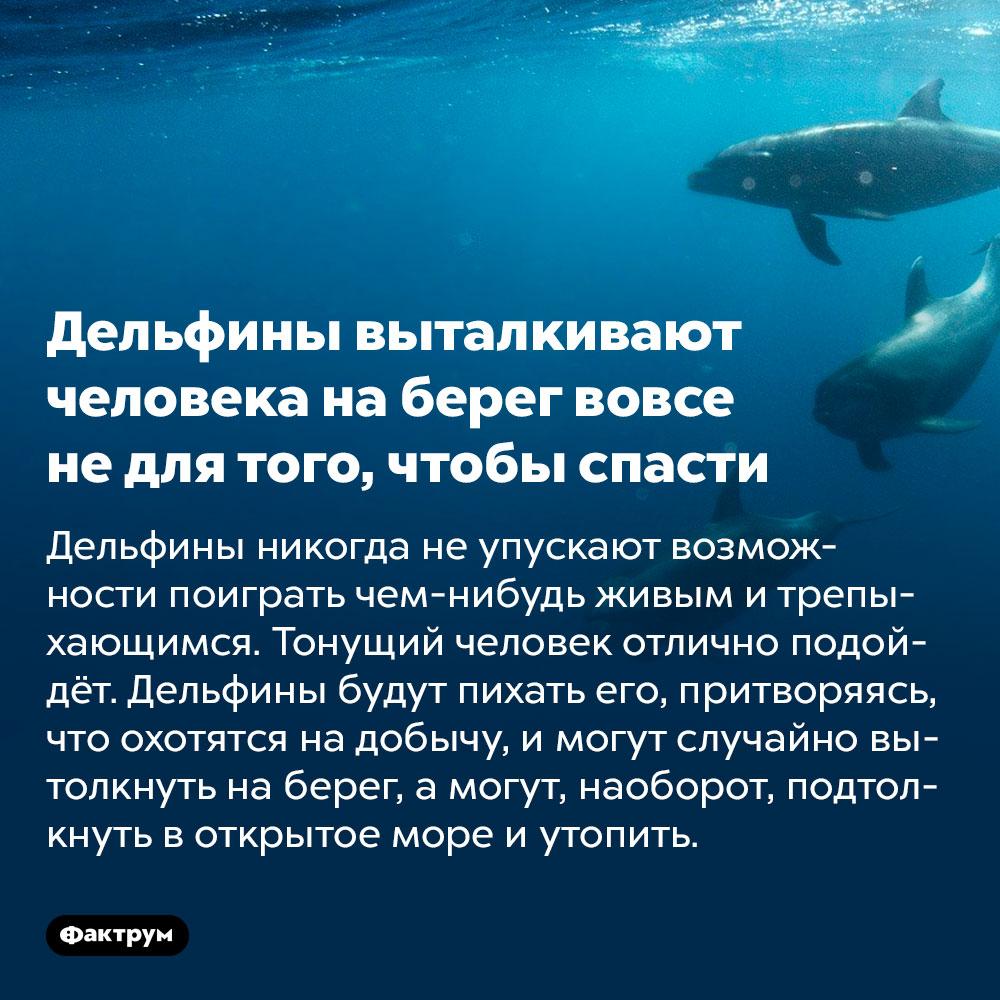 Дельфины выталкивают человека наберег вовсе недля того, чтобы спасти. Дельфины никогда не упускают возможности поиграть чем-нибудь живым и трепыхающимся. Тонущий человек отлично подойдёт. Дельфины будут пихать его, притворяясь, что охотятся на добычу, и могут случайно вытолкнуть на берег, а могут, наоборот, подтолкнуть в открытое море и утопить.
