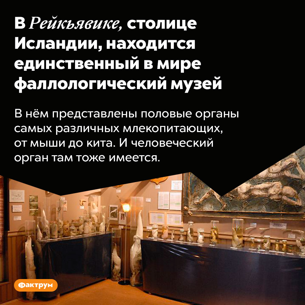 В Рейкьявике, столице Исландии, находится единственный в мире фаллологический музей. В нём представлены половые органы самых различных млекопитающих, от мыши до кита. И человеческий орган там тоже имеется.