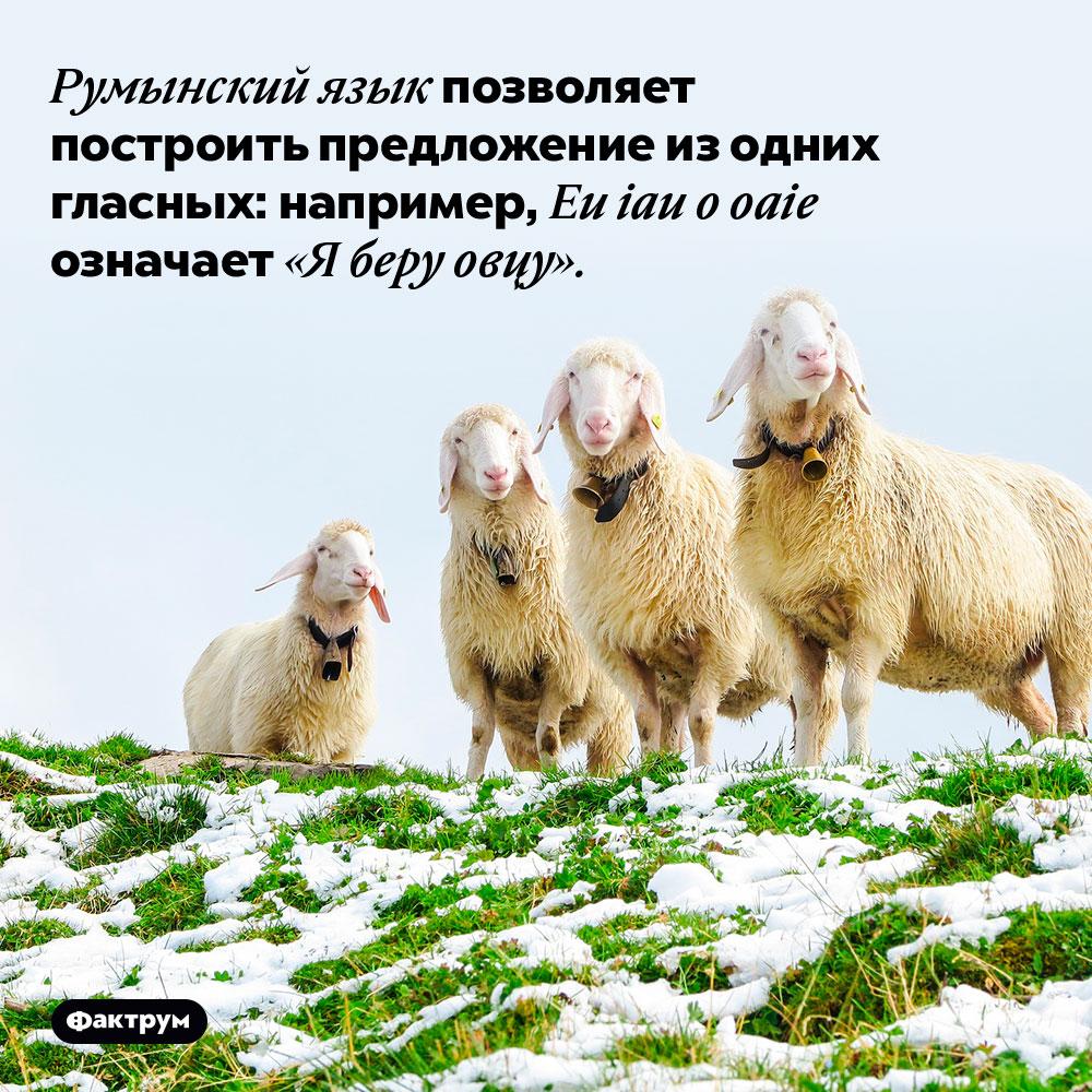 Румынский язык позволяет построить предложение из одних гласных: например, Eu iau o oaie означает «Я беру овцу».