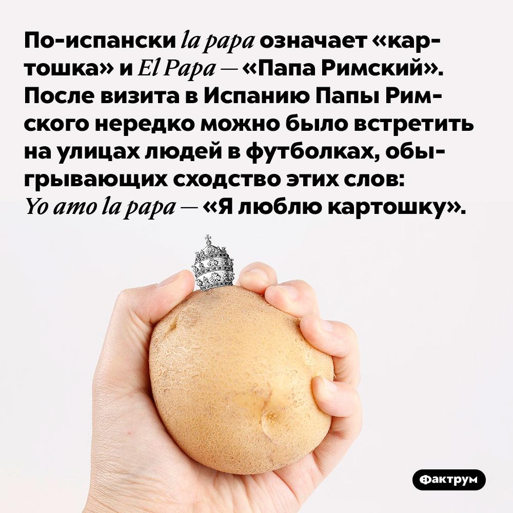 По-испански la papa означает «картошка» и El Papa — «Папа Римский».  После визита в Испанию Папы Римского нередко можно было встретить на улицах людей в футболках, обыгрывающих сходство этих слов: Yo amo la papa — «Я люблю картошку».